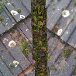 Ontmossen dak – dakonderhoud – mos verwijderen op het dak